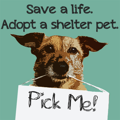Adopt a Shelter Pet Image